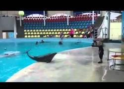 Enlace a ¡Ver a este delfín jugar a la pelota con un niño es genial!