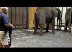 Enlace a Así es el nacimiento de un elefante :')