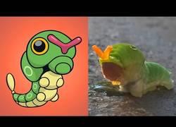 Enlace a 14 animales en los que se han inspirado para crear Pokémons
