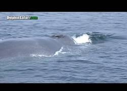 Enlace a El intento de rescate de una ballena azul