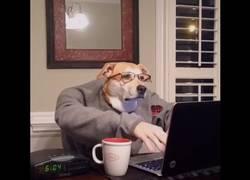 Enlace a Cuando eres un perro y tienes que madrugar para trabajar