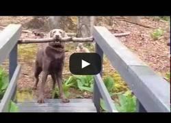 Enlace a Demostrado: los perros son más listos que nosotros