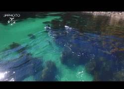 Enlace a Drone captura este mágico momento con dos orcas surcando el mar
