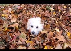 Enlace a El otoño es la estación que más les gusta a estos perros