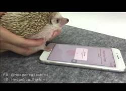 Enlace a Esta es la mayor seguridad para un iPhone y el detector de huellas