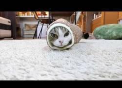 Enlace a Maru, el famoso gato japonés... atascado en una manga y el final es dramático :(