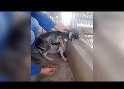 Enlace a La dramática reacción de este perrito al ser acariciado por primera vez tras ser maltratado