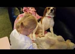Enlace a Este perrito recibe mucho amor después de salir herido en su patita