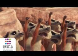 Enlace a Catch It, un corto nominado al Oscar sobre unos suricatas defendiendo un preciado fruto