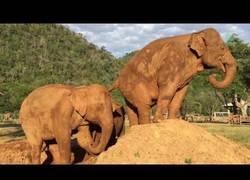 Enlace a La asquerosa venganza de este elefante tras tirarle del montículo