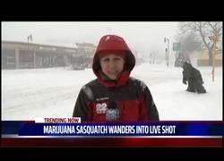 Enlace a Esta reportera fue sorprendida por un hombre-marihuana en plena retransmisión en directo