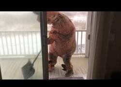 Enlace a No es fácil ser un T-Rex y hacer las tareas de casa en día de nieve