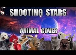 Enlace a Nuestros animales favoritos interpretan el tema del momento