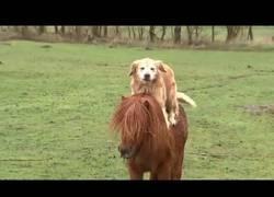 Enlace a El perro que amaba cabalgar sobre el pony