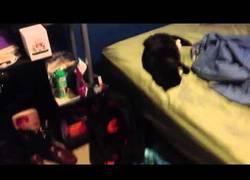 Enlace a TERRIBLE: Despiertan a un gato con un petardo