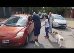 Enlace a Esta mujer trata de abandonar a su perro en plena calle y es humillada en público
