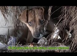Enlace a El terrible sufrimiento de este perrito abandonado en mitad de una tormenta que termina felizmente