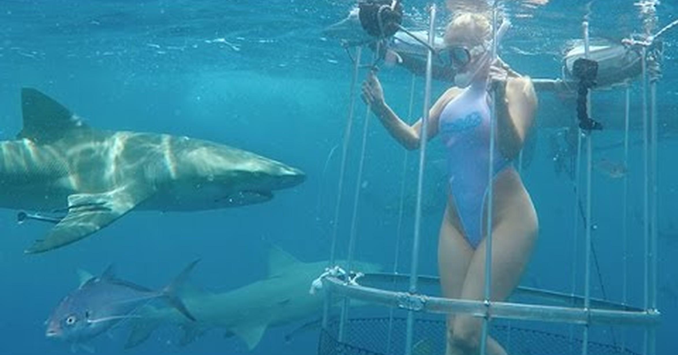 Ataque Tiburon Estrella Porno Fake no tengo tele! / muy fuerte: un tiburón le muerde la pierna