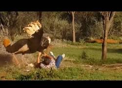 Enlace a Esta enorme avestruz entra en cólera y ataca a un hombre