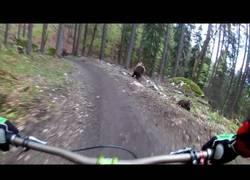 Enlace a El terrible susto de estos ciclistas en mitad de la montaña durante un descenso