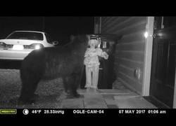 Enlace a La mejor manera de asustar a los osos cuando se acercan a la basura de casa