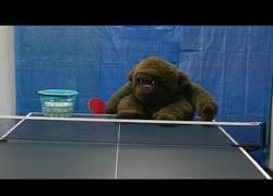 Enlace a A este chico cada vez se le va más la olla con el ping pong