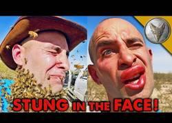 Enlace a Coyote Peterson se cubre la cara de 3000 abejas y termina fatal...