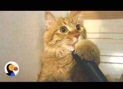 Enlace a El gatito que amaba lamer la aspiradora