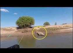Enlace a Intentan pescar a un cocodrilo y se llevan una terrible sorpresa