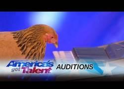Enlace a La gallina que triunfó tocando el piano en America's Got Talent