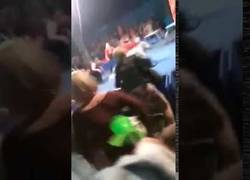 Enlace a El terrible ataque de un oso en pleno espectáculo de un circo