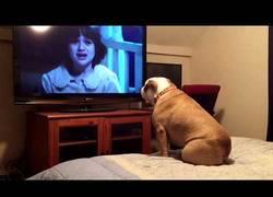 Enlace a Este bulldog vive al máximo una película de terror