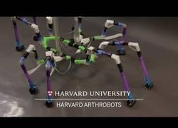 Enlace a Robots fabricados a partir de pajitas