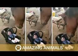 Enlace a El caballo que hacía feliz a este bebé balanceándolo