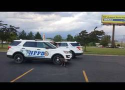 Enlace a La primera vez que un animal persigue a una patrulla de policía