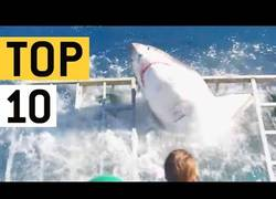 Enlace a Top 10: Encuentros con tiburones