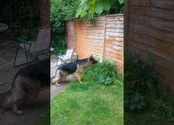 Enlace a Cuando tu perro confunde una flor con el más peligroso de los intrusos