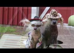 Enlace a WTF, Nathan el perro bailarín nos vuelve a sorprender con un baile loco