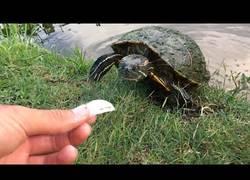 Enlace a Las tortugas y peces en este estance vienen a comer directamente desde tu mano