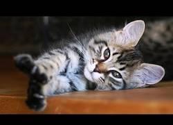Enlace a Gatos a punto de dormir es lo más adorable que verás hoy