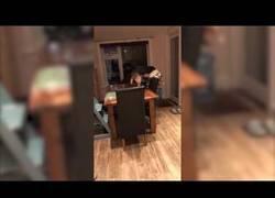 Enlace a Este perro usa de forma inteligente una silla para pillarse un poco de comida