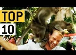 Enlace a Los monos y su forma de trolear a la gente