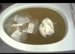 Enlace a Los coreanos tienen la técnica definitiva para desatascar un baño