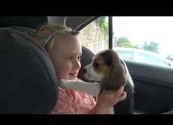 Enlace a La adorable reacción al tener una mascota nueva