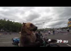 Enlace a Yendo de paseo con el oso como cualquier persona hace