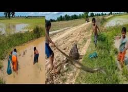 Enlace a Pelean contra una enorme serpiente en estanque de agua