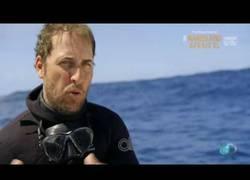 Enlace a Se sale de la jaula protectora y se pone a nadar con tiburones en la Isla Guadalupe