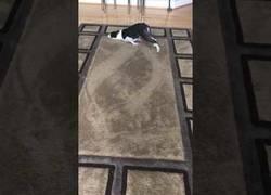 Enlace a Este perro también conoce el placer de hacer dibujos en esas alfombras