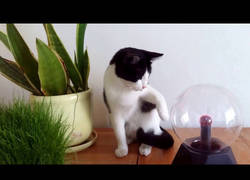 Enlace a Experimento animal: gato vs. bola de plasma