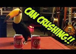 Enlace a Este tucán está obsesionado con las latas de Coca-Cola y no parará hasta destrozarlas